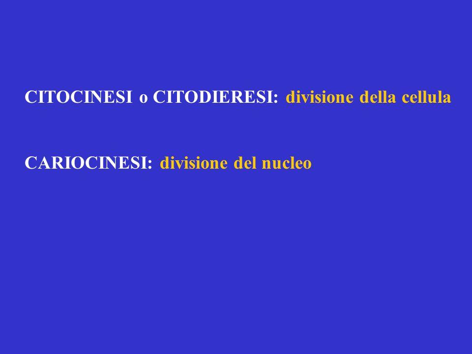 CITOCINESI o CITODIERESI: divisione della cellula