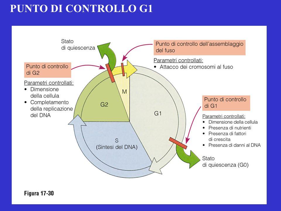 PUNTO DI CONTROLLO G1