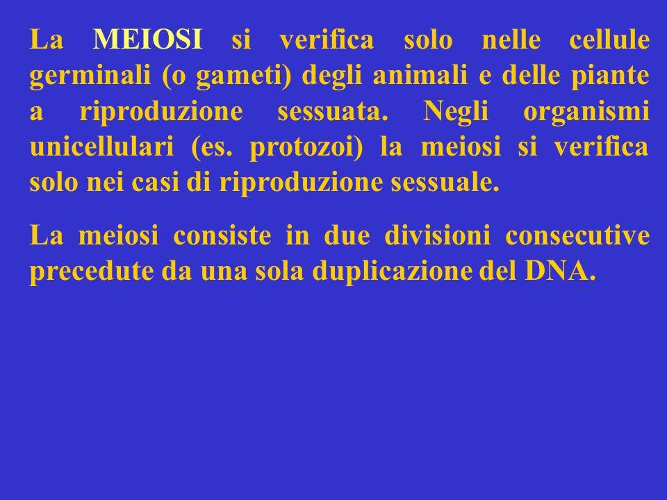 La MEIOSI si verifica solo nelle cellule germinali (o gameti) degli animali e delle piante a riproduzione sessuata. Negli organismi unicellulari (es. protozoi) la meiosi si verifica solo nei casi di riproduzione sessuale.