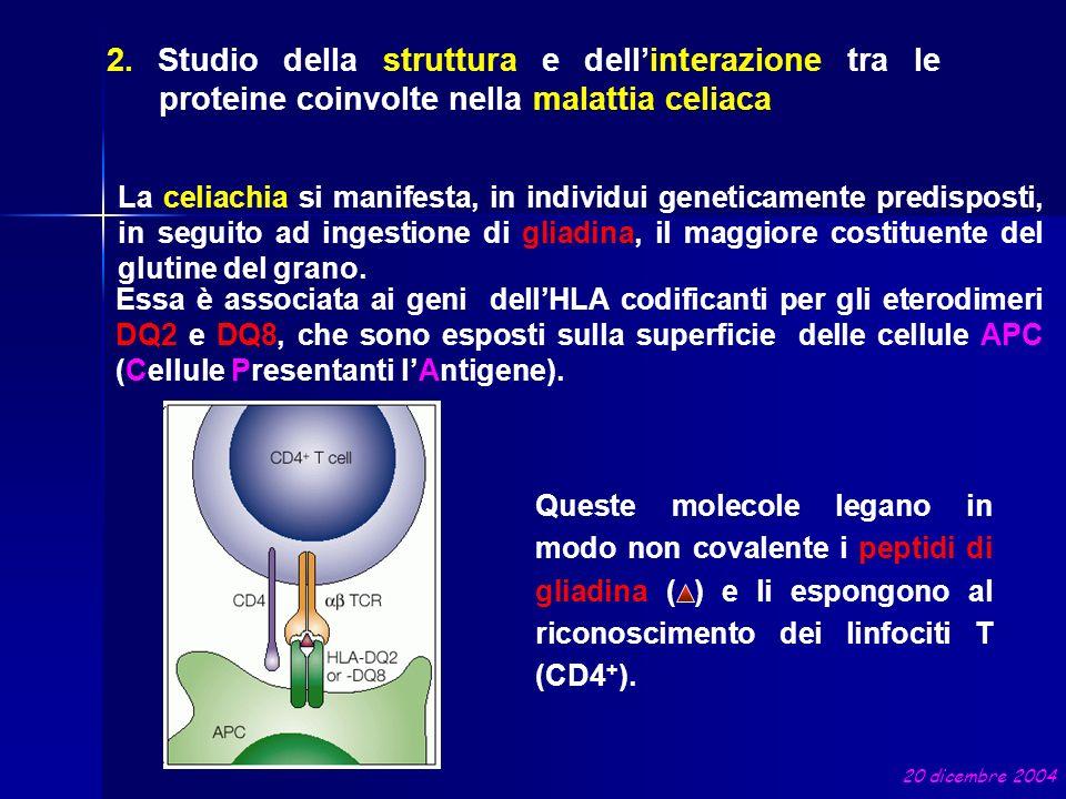 2. Studio della struttura e dell'interazione tra le proteine coinvolte nella malattia celiaca