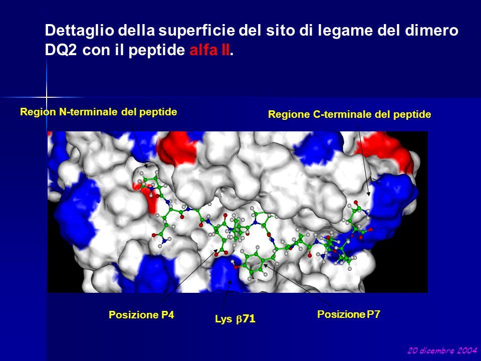 Dettaglio della superficie del sito di legame del dimero DQ2 con il peptide alfa II.