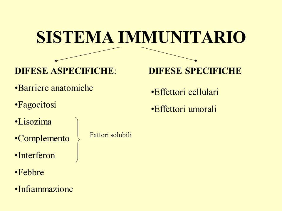 SISTEMA IMMUNITARIO DIFESE ASPECIFICHE: Barriere anatomiche Fagocitosi