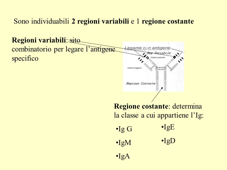 Sono individuabili 2 regioni variabili e 1 regione costante