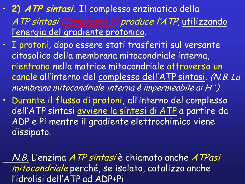 2) ATP sintasi. Il complesso enzimatico della