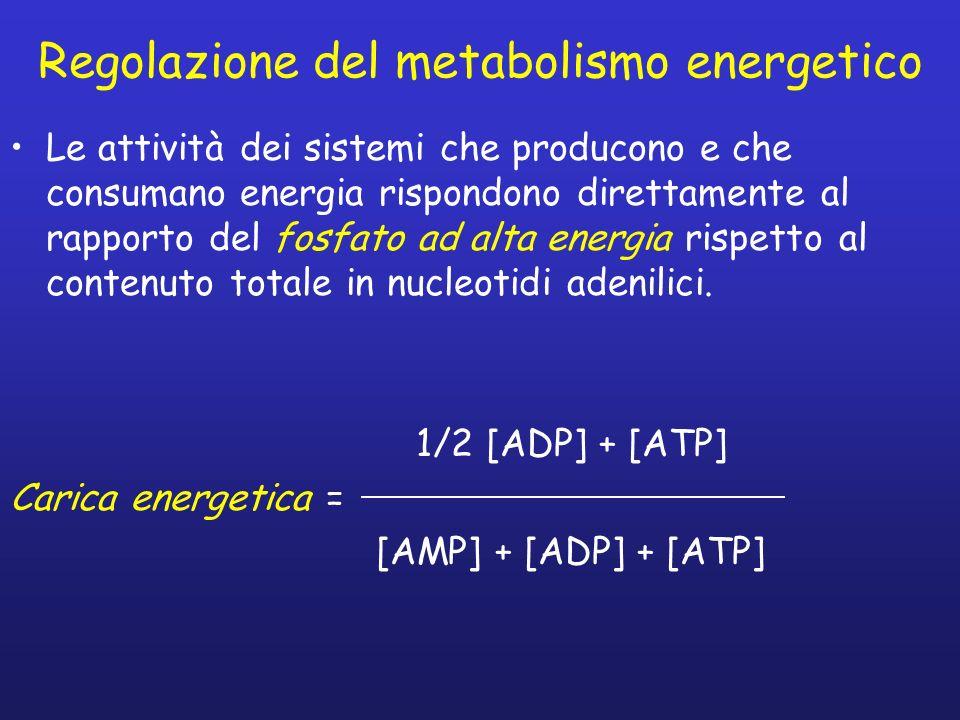 Regolazione del metabolismo energetico