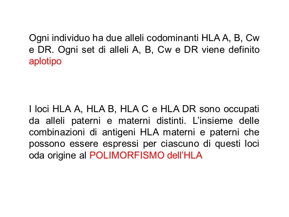 Ogni individuo ha due alleli codominanti HLA A, B, Cw e DR