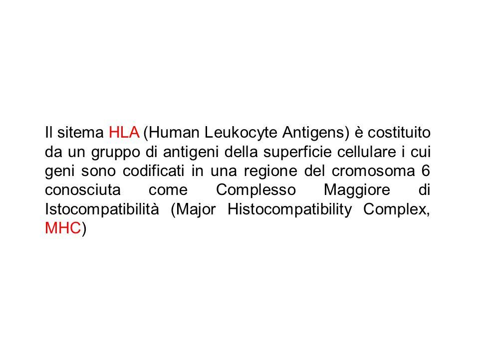 Il sitema HLA (Human Leukocyte Antigens) è costituito da un gruppo di antigeni della superficie cellulare i cui geni sono codificati in una regione del cromosoma 6 conosciuta come Complesso Maggiore di Istocompatibilità (Major Histocompatibility Complex, MHC)