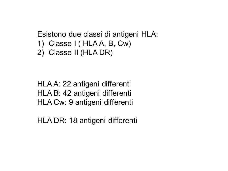 Esistono due classi di antigeni HLA: