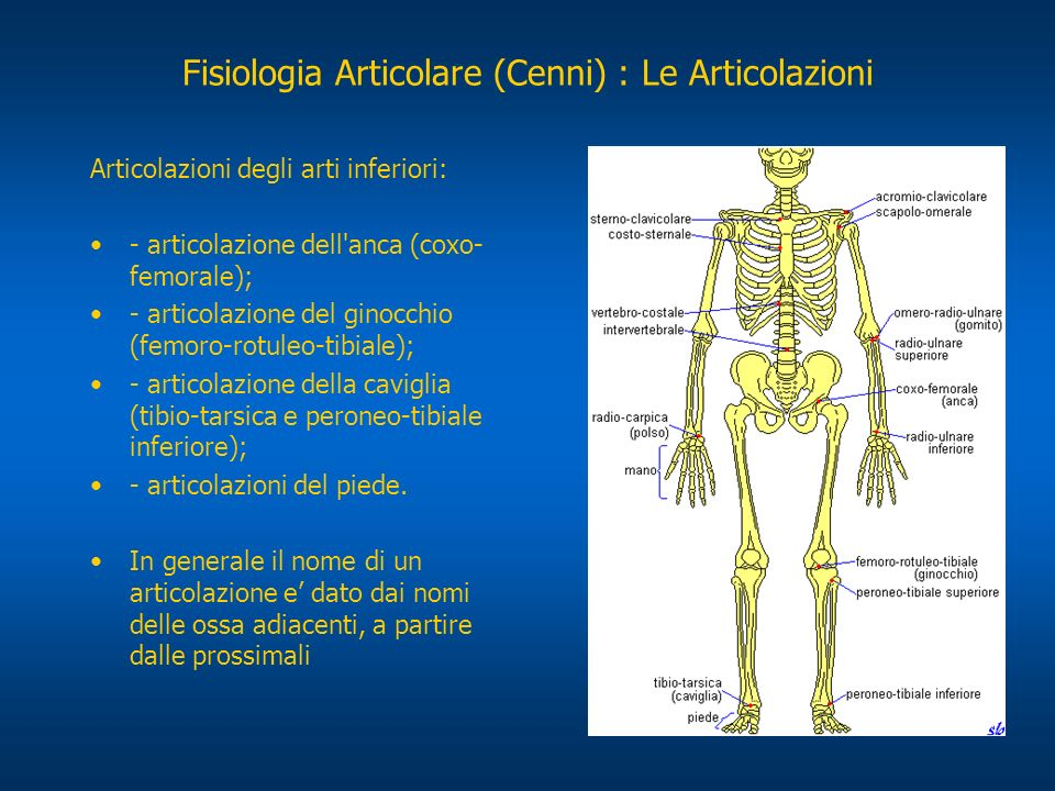 Fisiologia Articolare (Cenni) : Le Articolazioni