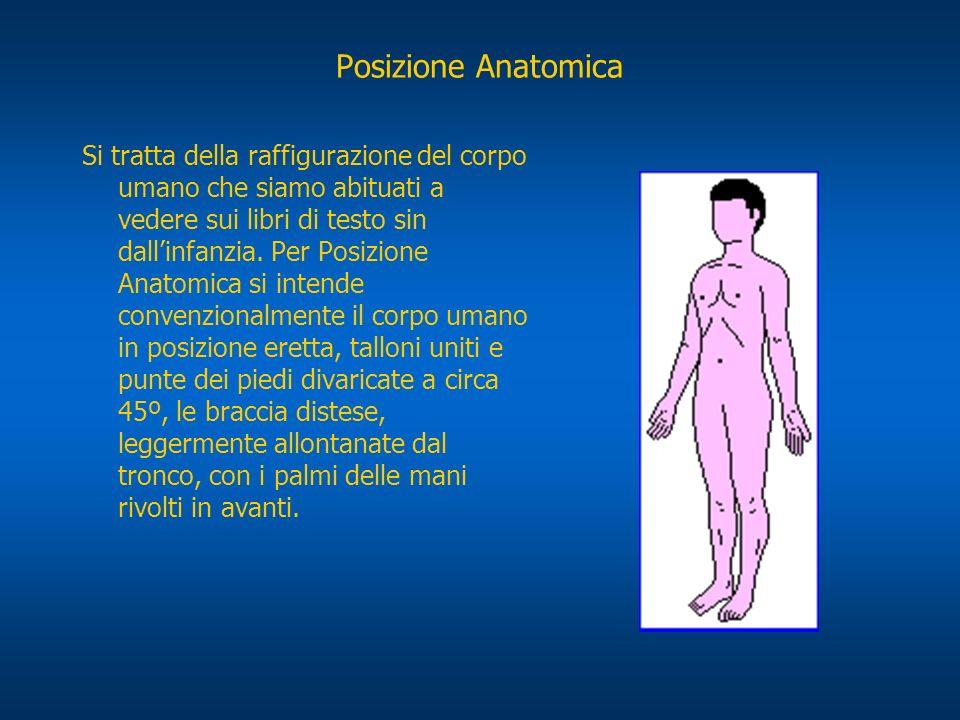 Posizione Anatomica