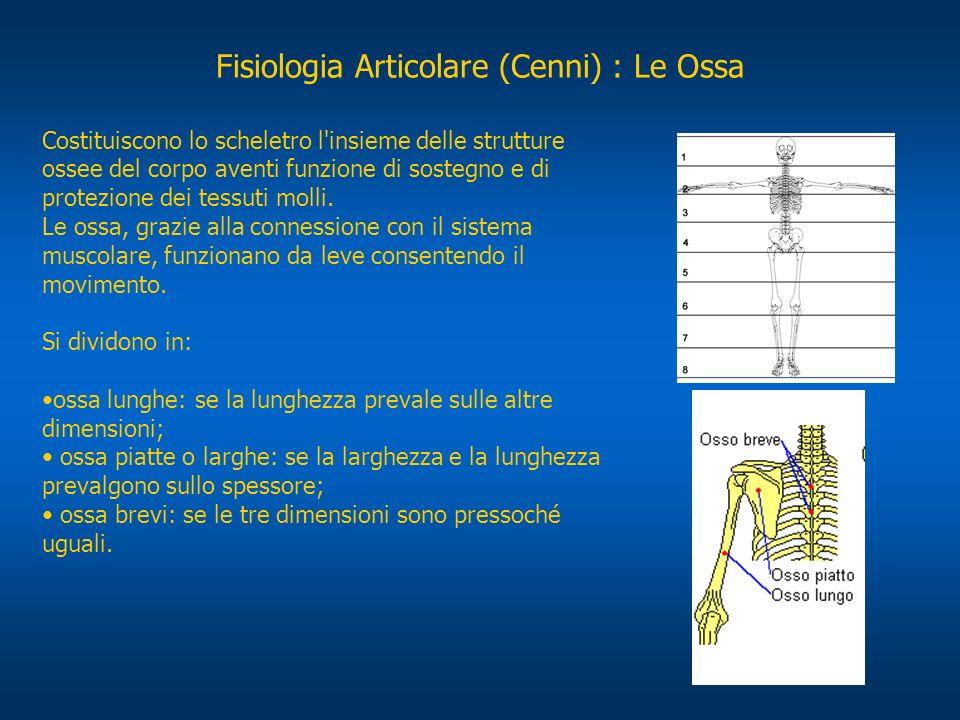Fisiologia Articolare (Cenni) : Le Ossa