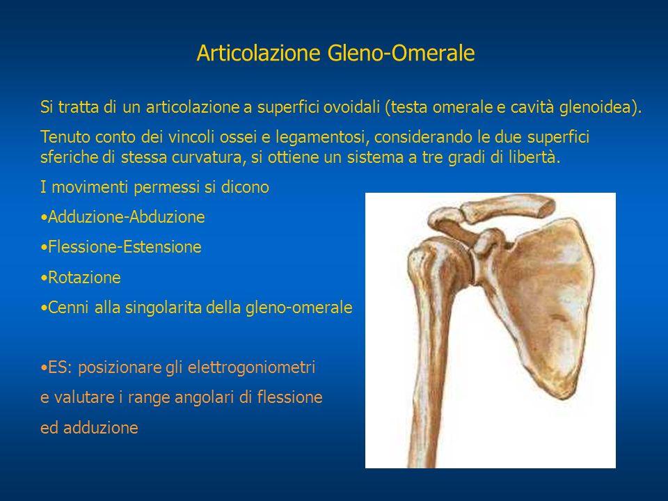 Articolazione Gleno-Omerale
