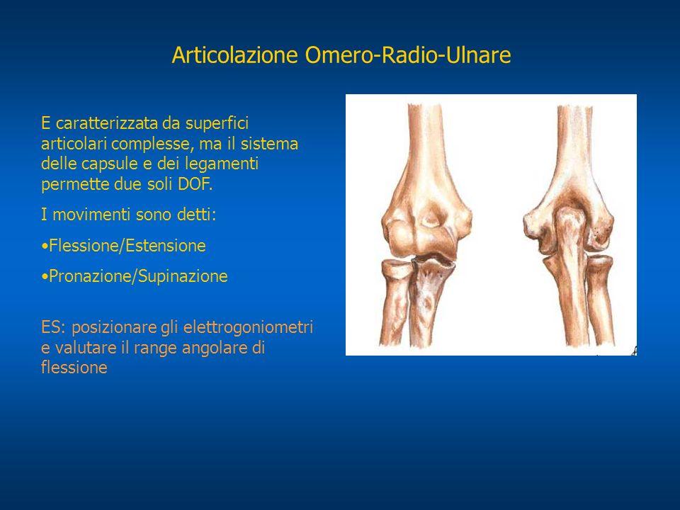 Articolazione Omero-Radio-Ulnare