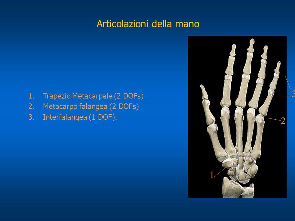 Articolazioni della mano