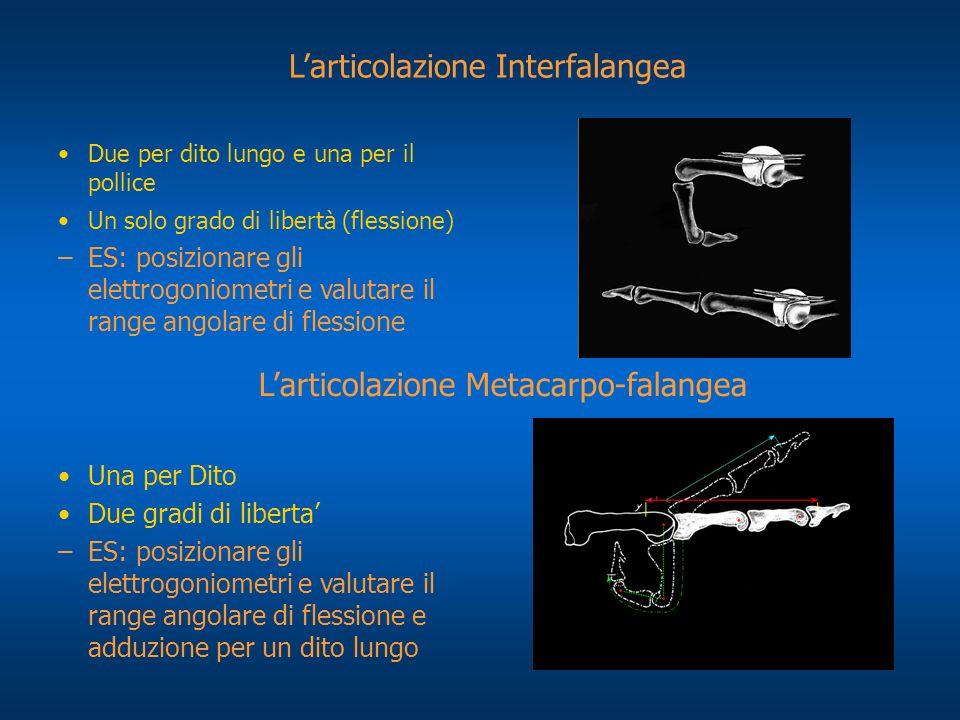 L'articolazione Interfalangea
