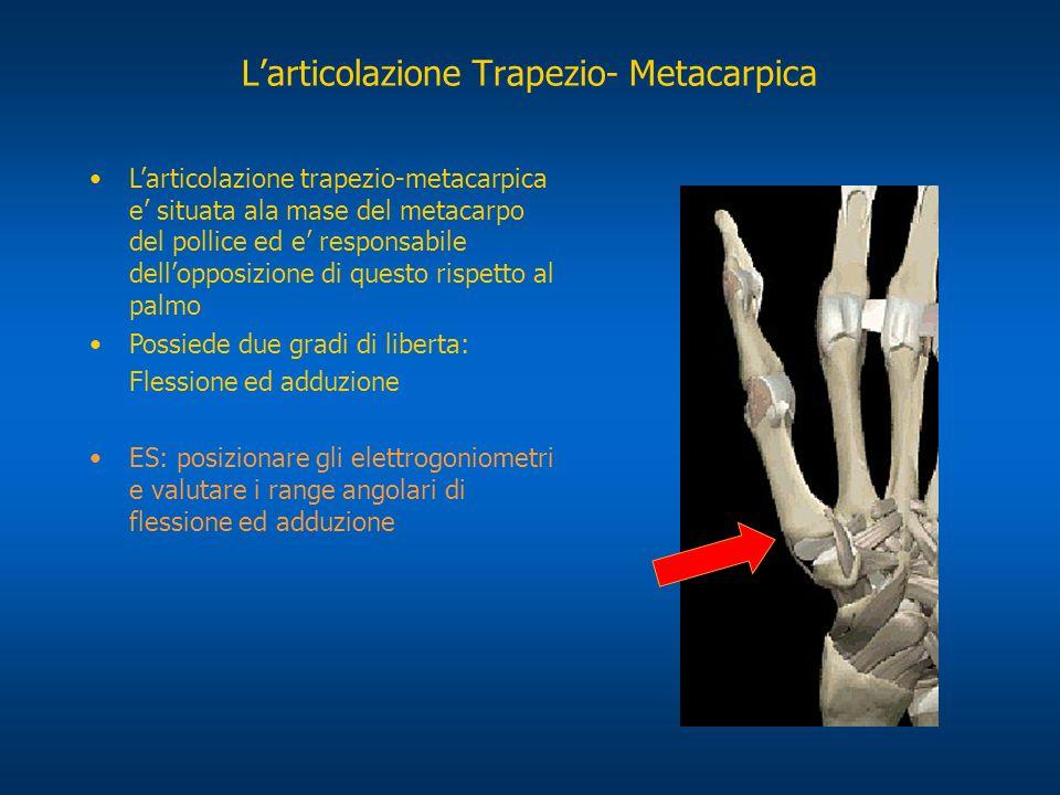 L'articolazione Trapezio- Metacarpica