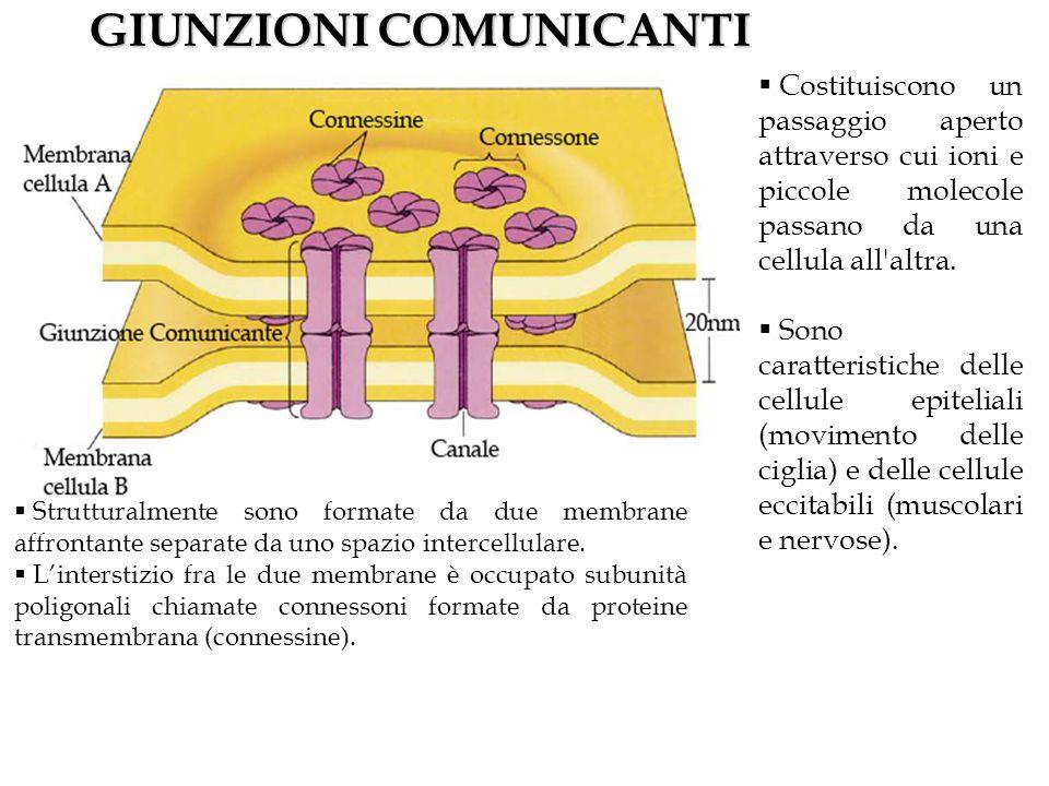 GIUNZIONI COMUNICANTI