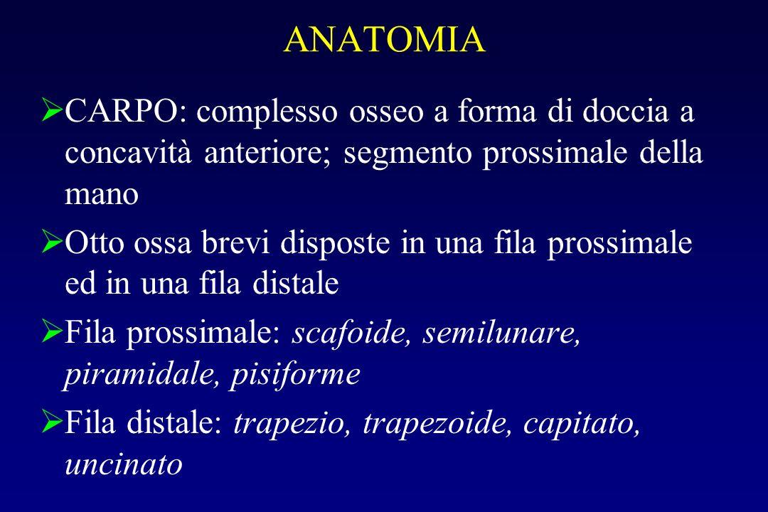 ANATOMIA CARPO: complesso osseo a forma di doccia a concavità anteriore; segmento prossimale della mano.