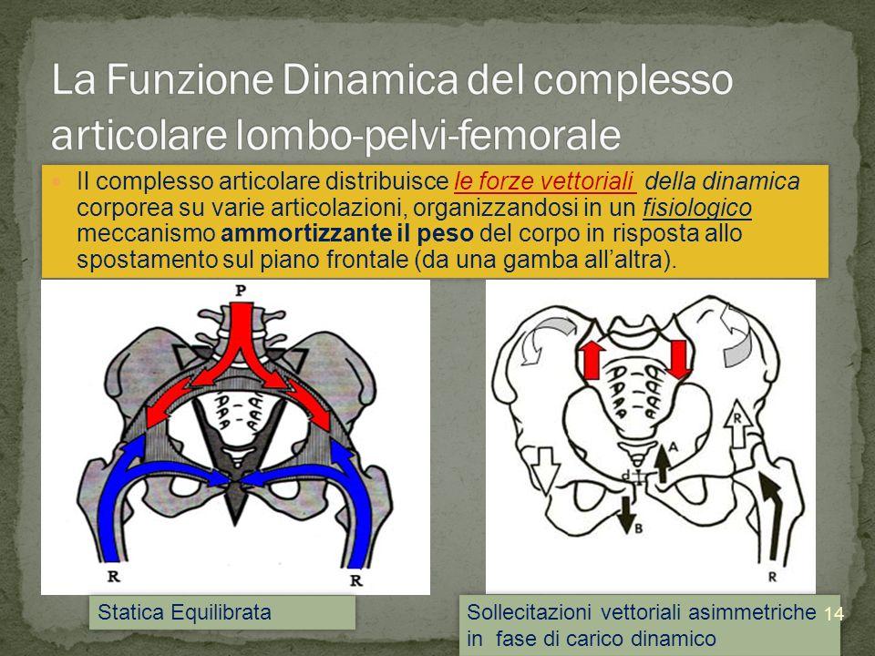 La Funzione Dinamica del complesso articolare lombo-pelvi-femorale