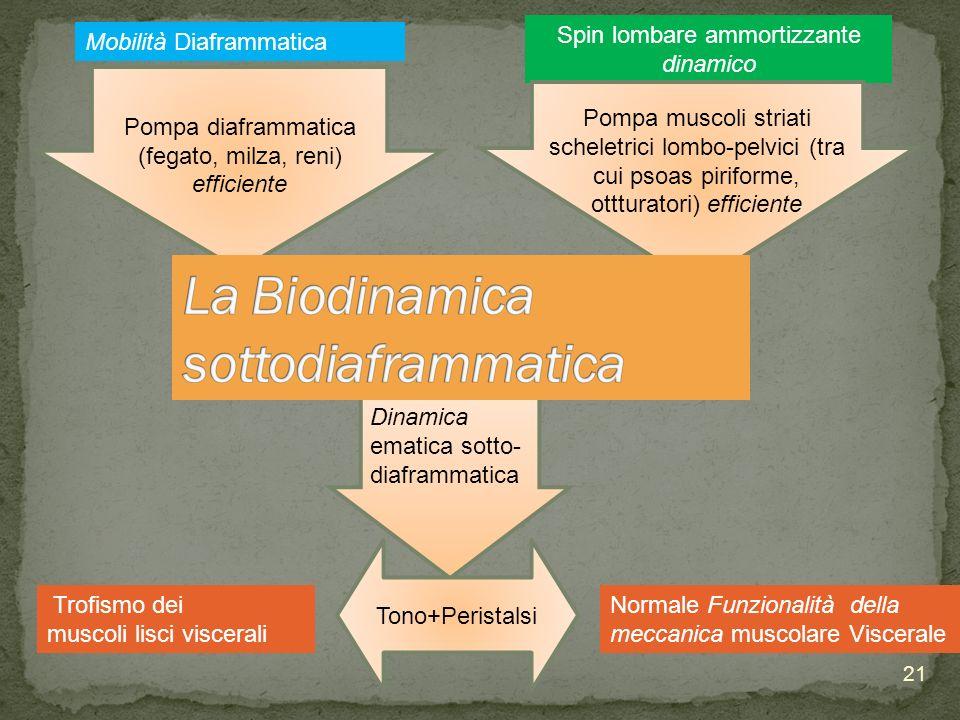 La Biodinamica sottodiaframmatica