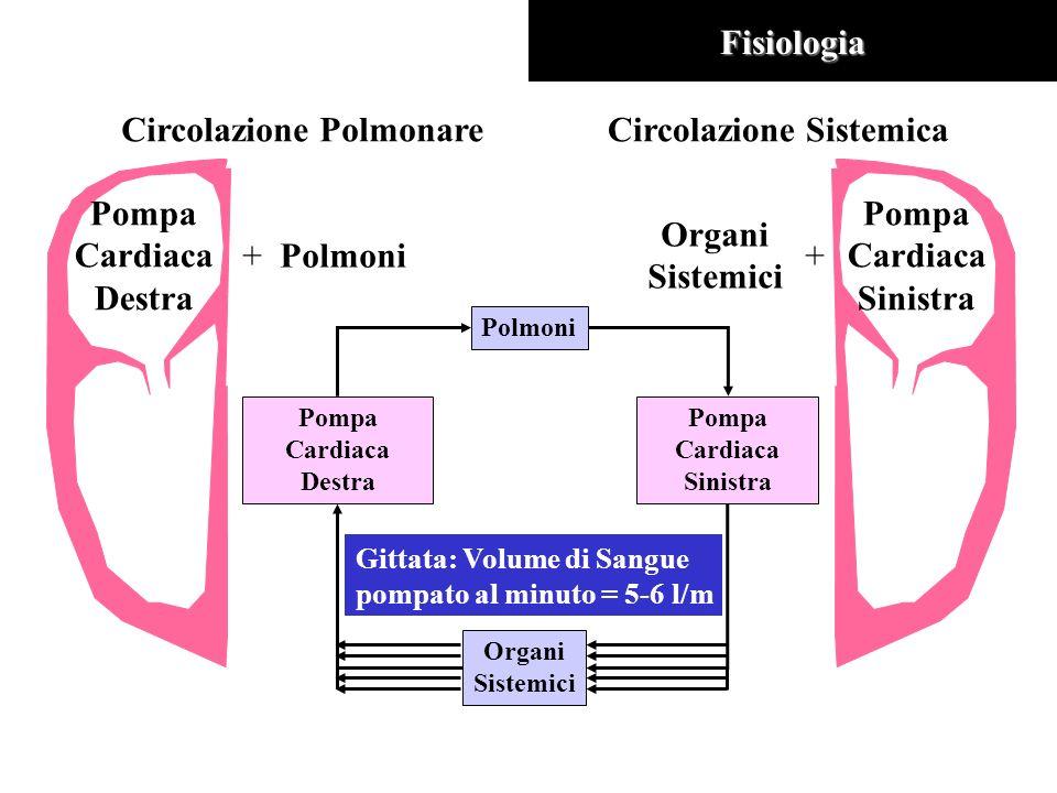Circolazione Polmonare Circolazione Sistemica