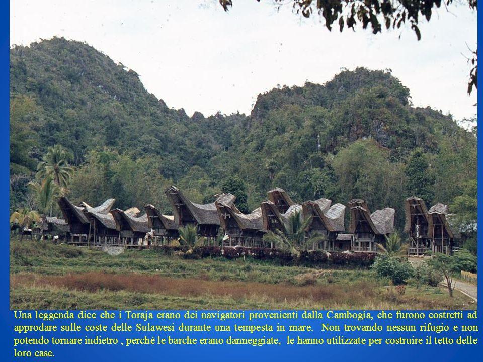 Una leggenda dice che i Toraja erano dei navigatori provenienti dalla Cambogia, che furono costretti ad approdare sulle coste delle Sulawesi durante una tempesta in mare. Non trovando nessun rifugio e non potendo tornare indietro , perché le barche erano danneggiate, le hanno utilizzate per costruire il tetto delle loro..case.