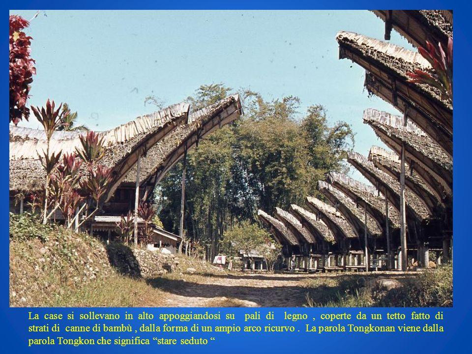 La case si sollevano in alto appoggiandosi su pali di legno , coperte da un tetto fatto di strati di canne di bambù , dalla forma di un ampio arco ricurvo .