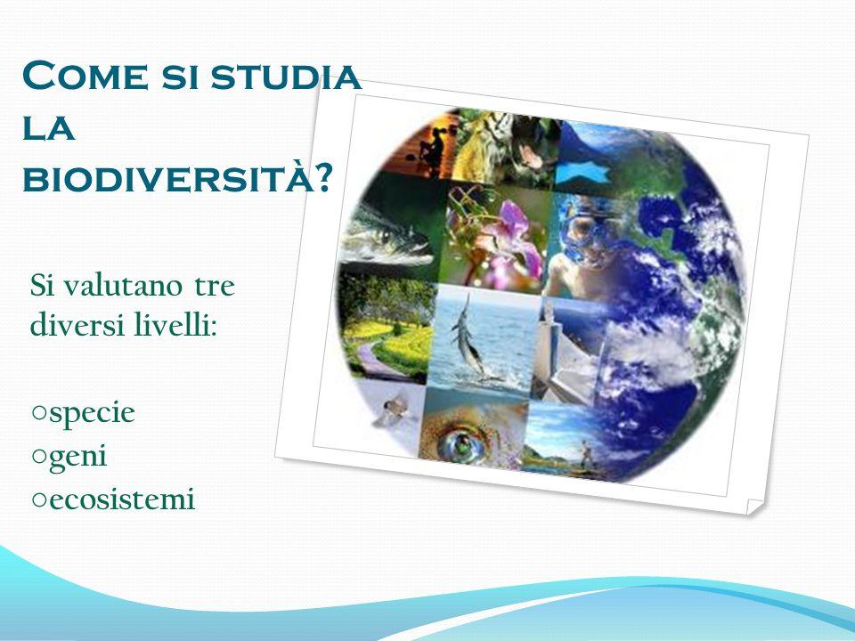 Come si studia la biodiversità