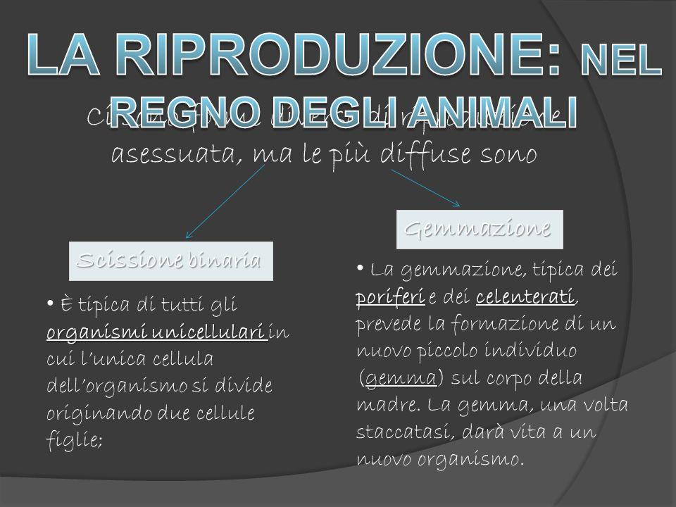 LA RIPRODUZIONE: NEL REGNO DEGLI ANIMALI