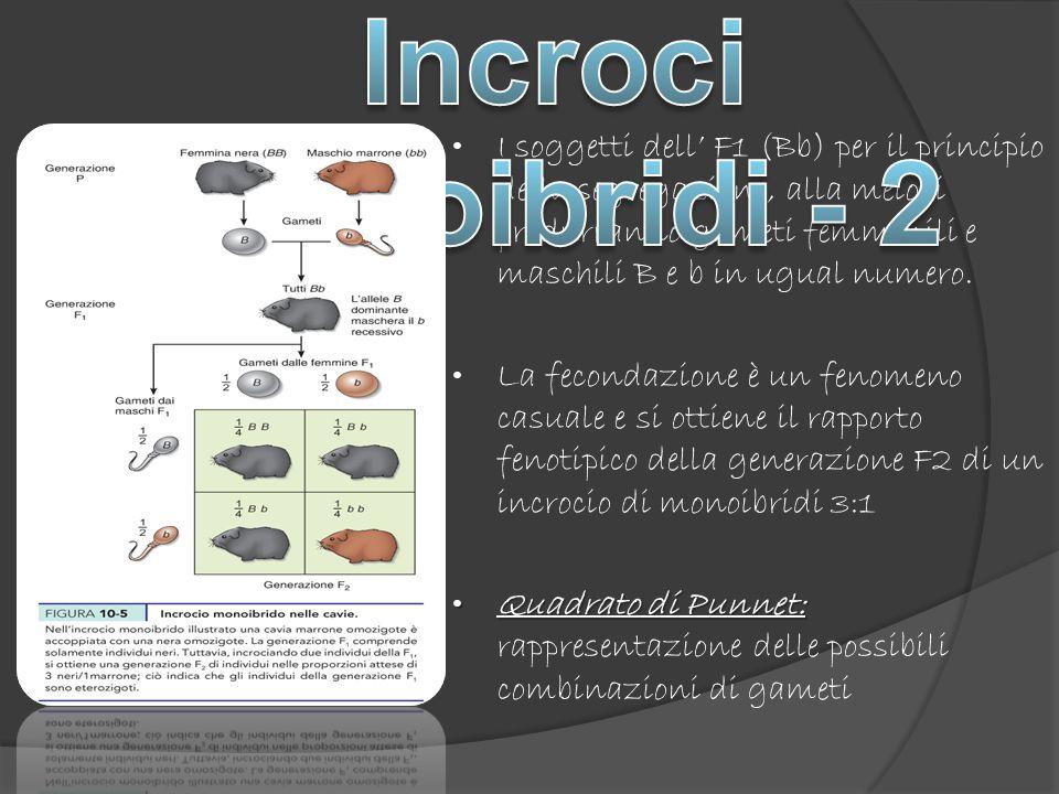 Incroci monoibridi - 2