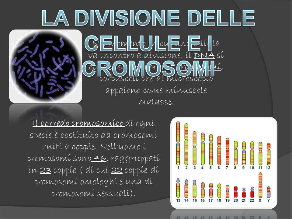 LA DIVISIONE DELLE CELLULE E I CROMOSOMI