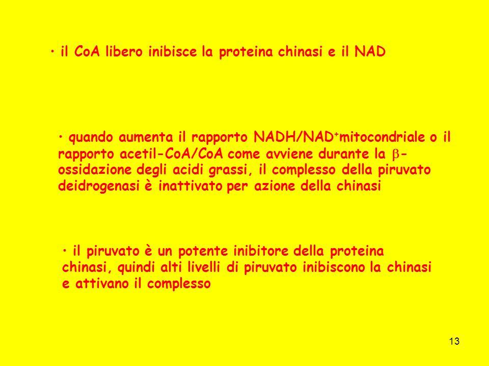 il CoA libero inibisce la proteina chinasi e il NAD
