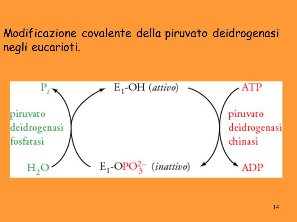 Modificazione covalente della piruvato deidrogenasi