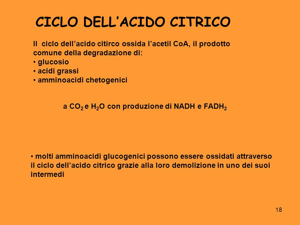 CICLO DELL'ACIDO CITRICO