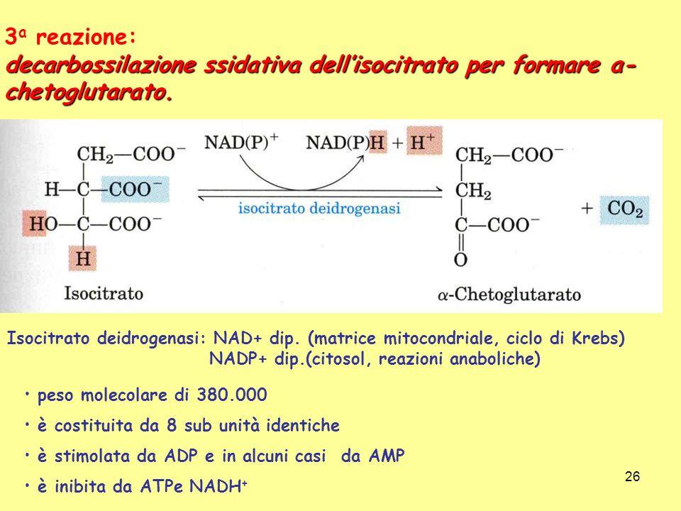 3a reazione: decarbossilazione ssidativa dell'isocitrato per formare a-chetoglutarato.