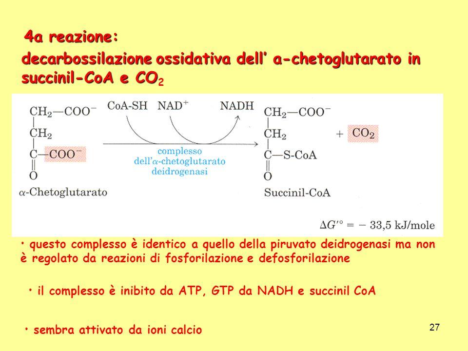 4a reazione: decarbossilazione ossidativa dell' a-chetoglutarato in succinil-CoA e CO2.