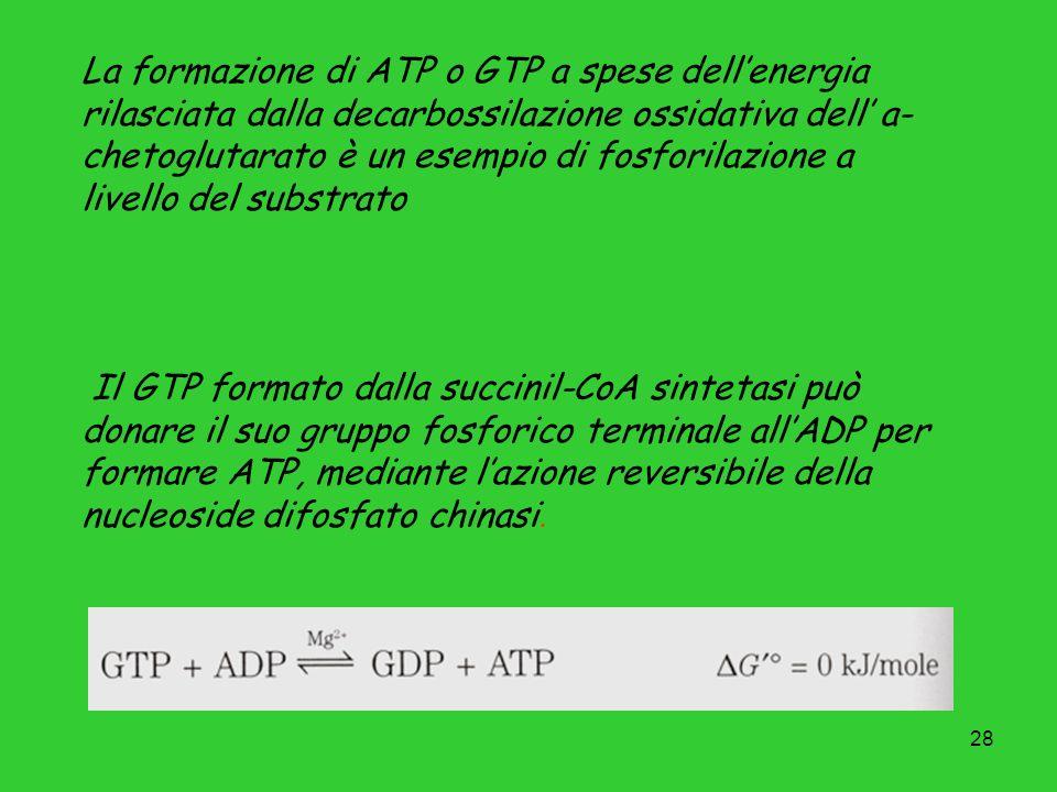 La formazione di ATP o GTP a spese dell'energia rilasciata dalla decarbossilazione ossidativa dell' a-chetoglutarato è un esempio di fosforilazione a livello del substrato