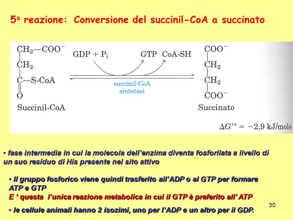 Conversione del succinil-CoA a succinato