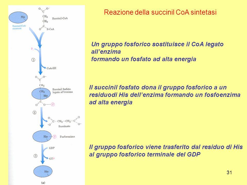 Reazione della succinil CoA sintetasi