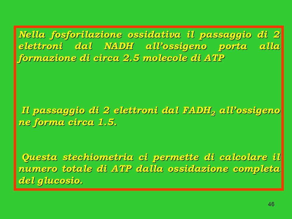 Nella fosforilazione ossidativa il passaggio di 2 elettroni dal NADH all'ossigeno porta alla formazione di circa 2.5 molecole di ATP
