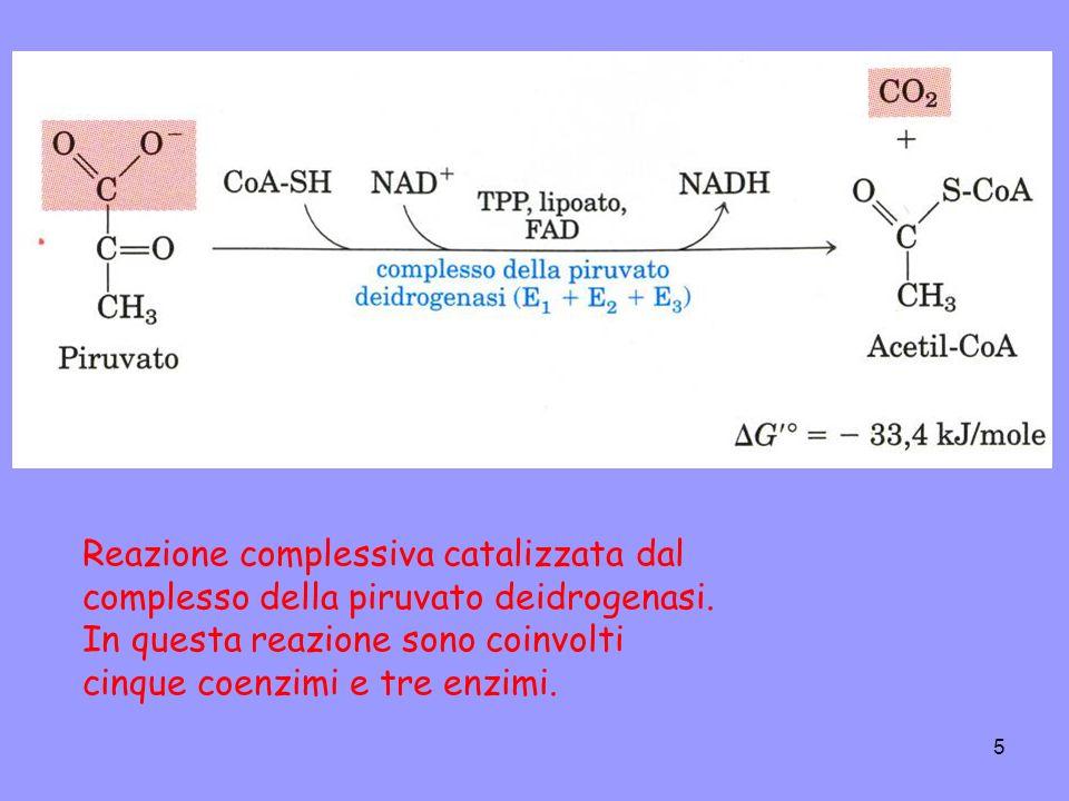 Reazione complessiva catalizzata dal