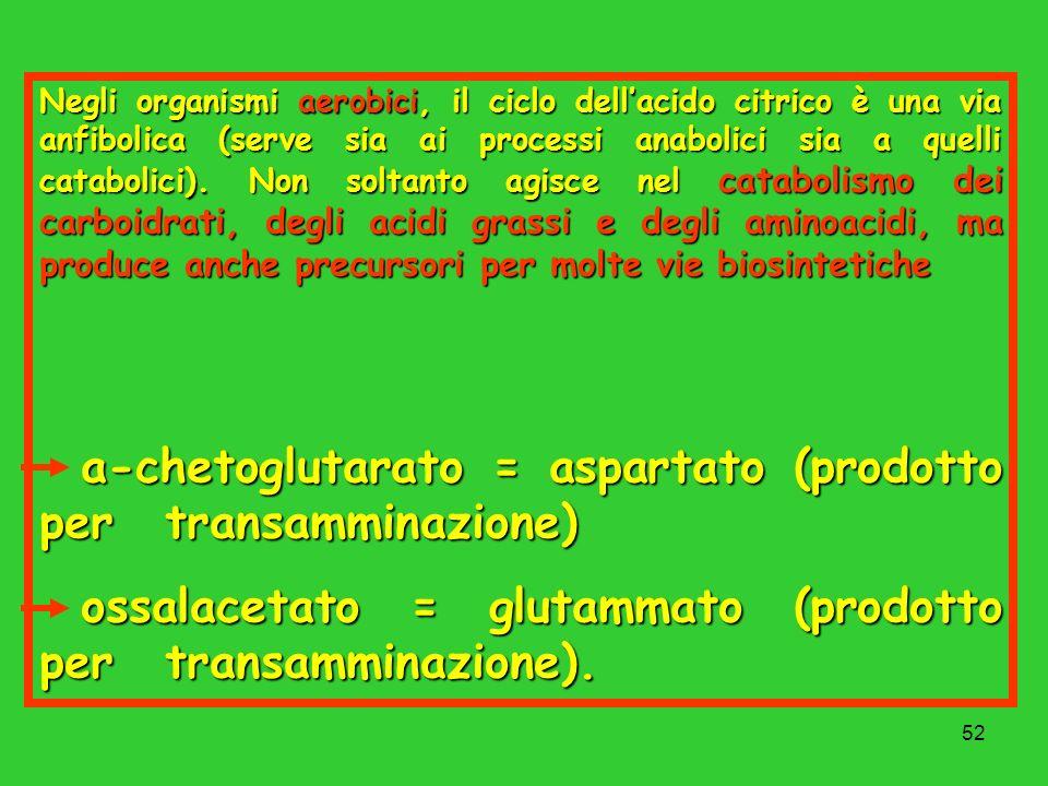 ossalacetato = glutammato (prodotto per transamminazione).