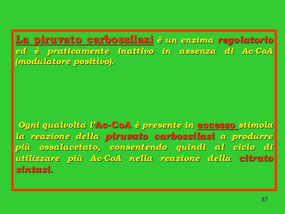 La piruvato carbossilasi è un enzima regolatorio ed è praticamente inattivo in assenza di Ac-CoA (modulatore positivo).
