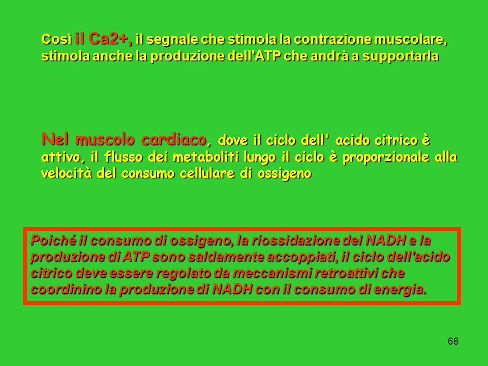 Così il Ca2+, il segnale che stimola la contrazione muscolare, stimola anche la produzione dell ATP che andrà a supportarla