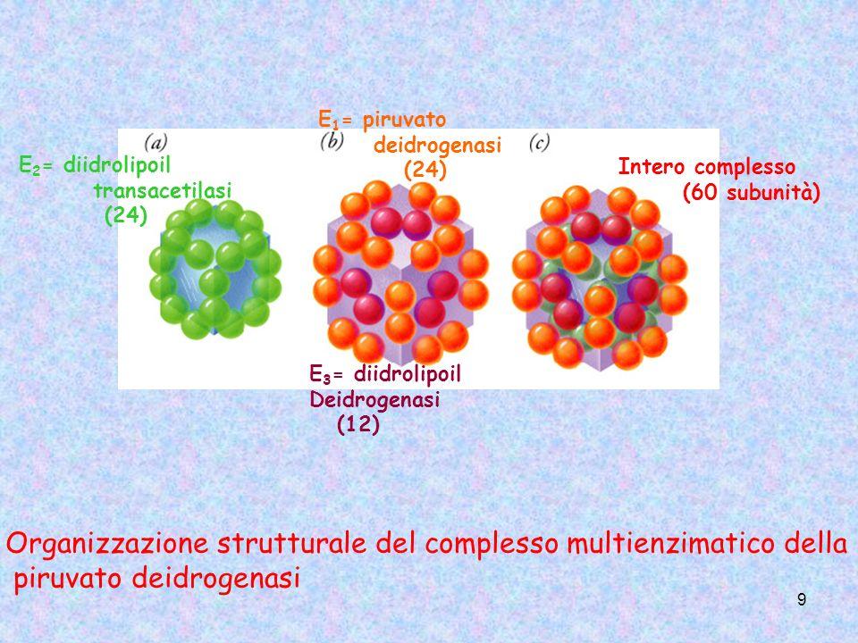 Organizzazione strutturale del complesso multienzimatico della