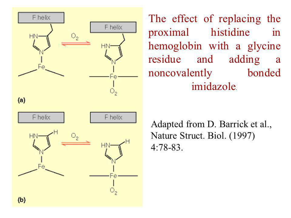 The effect of replacing the proximal histidine in hemoglobin with a glycine residue and adding a noncovalently bonded imidazole.