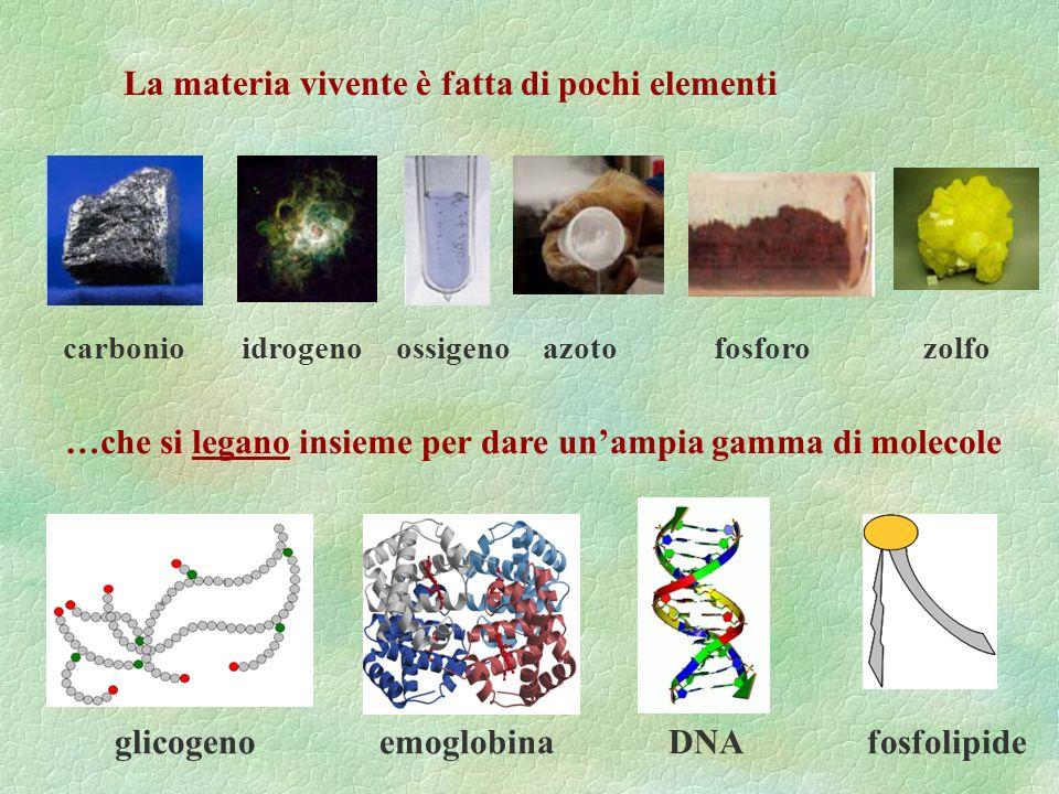 La materia vivente è fatta di pochi elementi