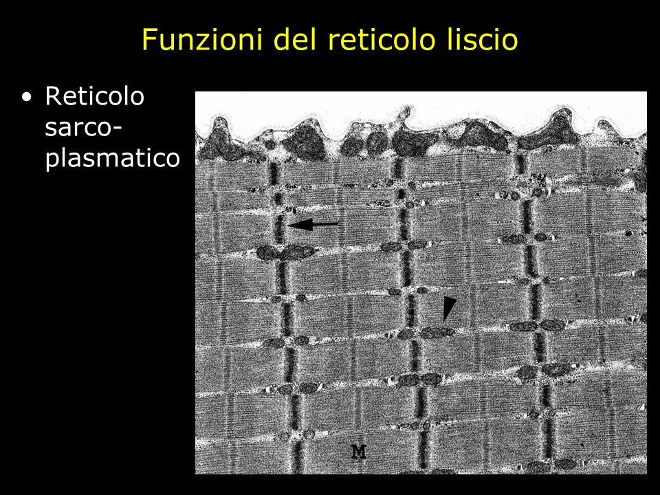 Funzioni del reticolo liscio