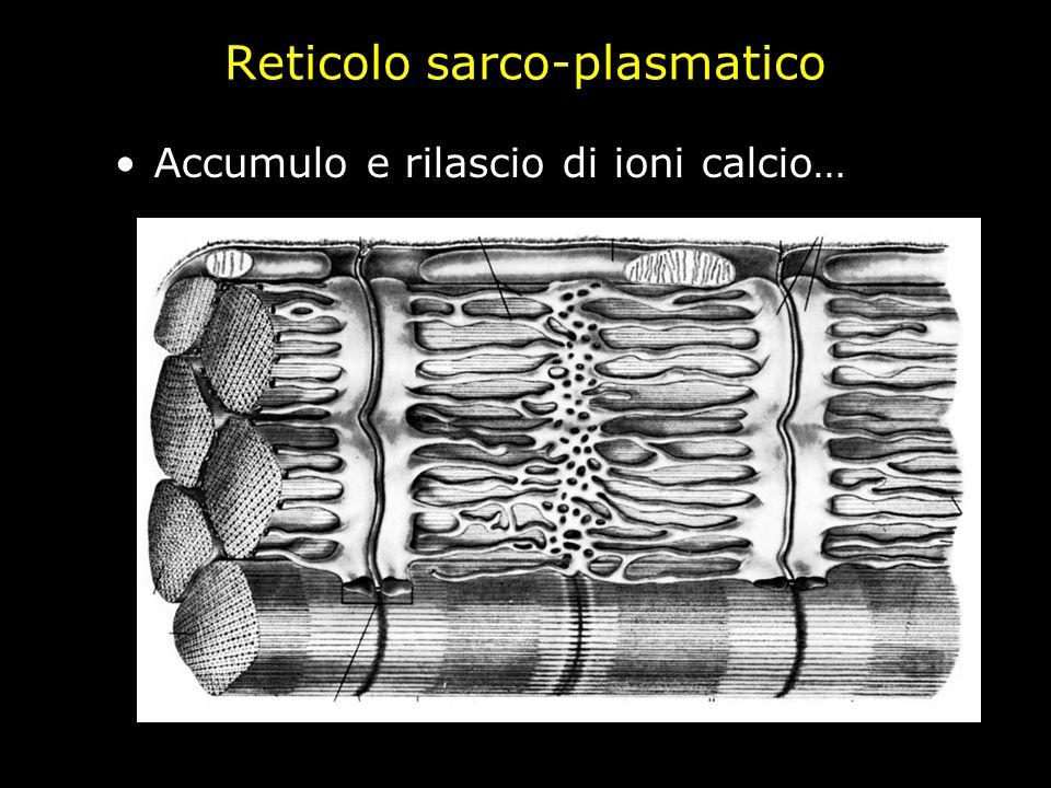 Reticolo sarco-plasmatico