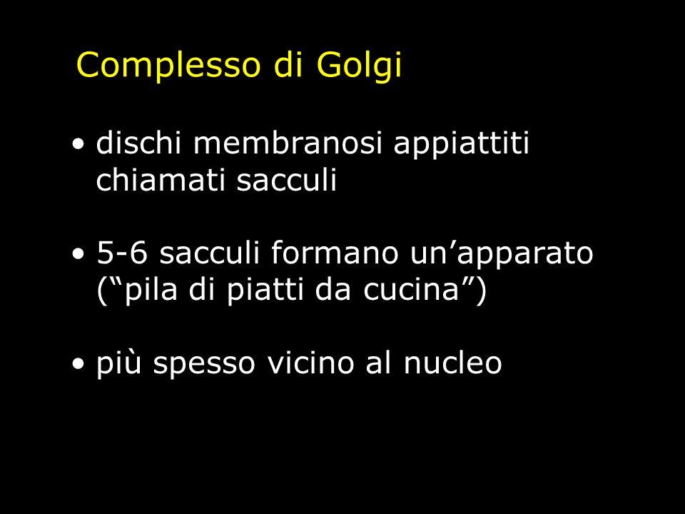 Complesso di Golgi dischi membranosi appiattiti chiamati sacculi